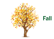Seneca Tree Services - Fall