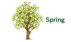 Seneca Tree Services - Spring
