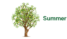 Seneca Tree Services - Summer