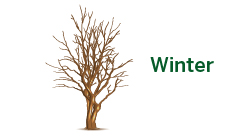 Seneca Tree Services - Winter
